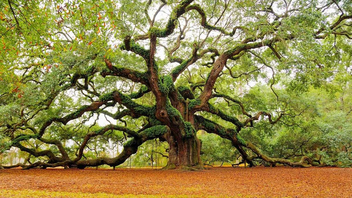 Our story angel oak creative angel oak creative is no different trips to charleston sc have been a part of caitlins story since she can remember biocorpaavc